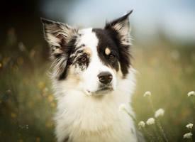 可愛的寵物狗花叢中玩耍圖片