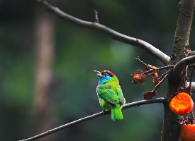 树枝上的啄木鸟图片