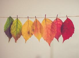 一組形狀各異的樹葉圖片欣賞