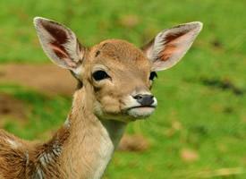 一组聪明伶俐的野生鹿图片欣赏
