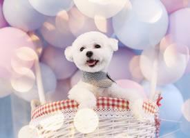 一組可愛的各種小狗狗拍攝圖片欣賞