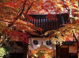 日本的秋天美景图片欣赏