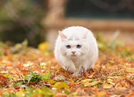 一組秋景里的小貓貓真是美極了