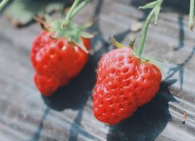 草莓園里的草莓圖片大全