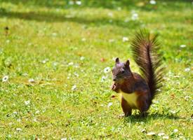 一组机灵可爱的棕色小松鼠图片欣赏