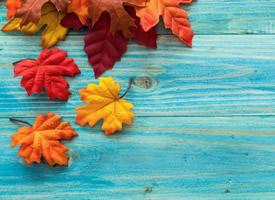 一組寂靜優美的梧桐樹葉圖片