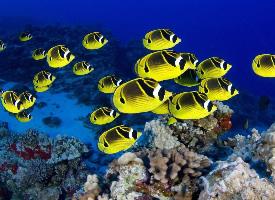 多彩个性的小鱼