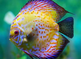 活泼清新的热带鱼