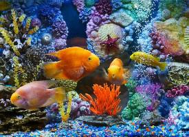 美丽自由的鱼群