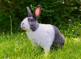 一組精致迷人的寵物兔圖片欣賞