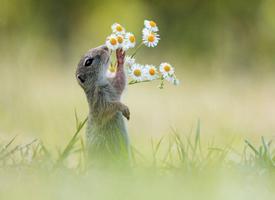 小松鼠站在草地上嗅花香可愛圖片大全