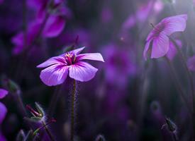 盛開的花卉養眼護眼桌面壁紙