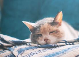 超級迷人可愛的小貓咪瞇眼圖片