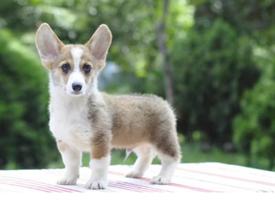 超級可愛的寵物狗圖片大全