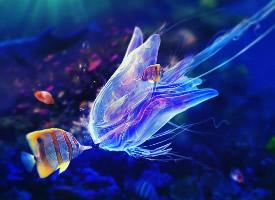欢快可爱的深海热带鱼