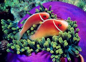 徜徉海中的热带鱼