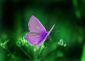 停在植物上美丽的蝴蝶图片
