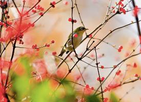 花间的小鸟唯美高清桌面壁纸
