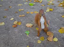 面容清秀,眼睛閃閃有光的小松鼠