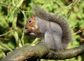 一組樹上可愛的小松鼠圖片欣賞
