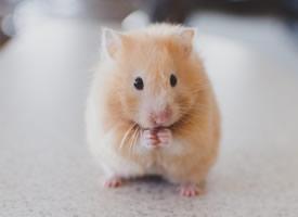 一组小巧聪明的小老鼠图片欣赏