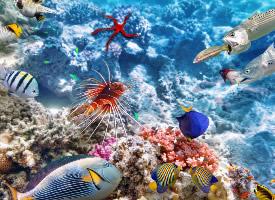 畅游海底的热带鱼