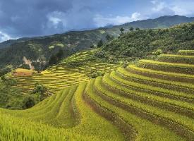 清新綠色梯田風景圖片