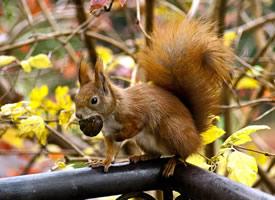 一組活波可愛的小松鼠圖片欣賞