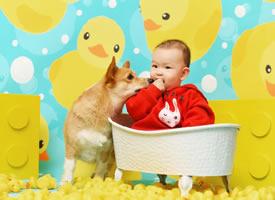 一組可愛的小寶寶和柯基的圖片