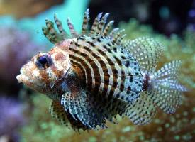 不同種類的魚兒圖片