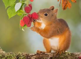 一組毛茸茸超可愛的棕色松鼠圖片