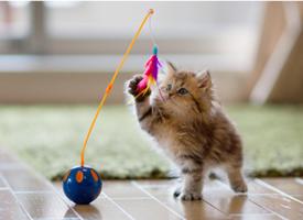俏皮可愛的寵物小貓咪圖片