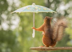 一組意境超美的松鼠藝術照圖片欣賞