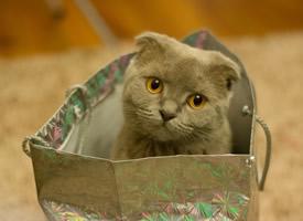 惹人喜愛的萌寵小貓咪圖片