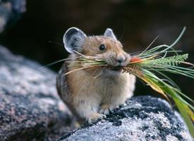 一組可愛的倉鼠吃東西圖片欣賞