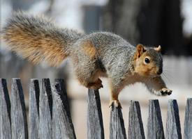 一組靈敏快捷可愛的小松鼠圖片