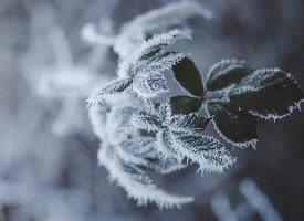 冬季霜冻美景图片