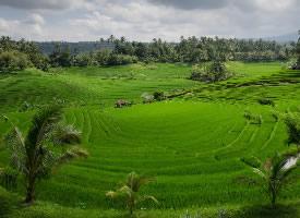 高清綠色田野圖片欣賞