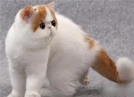 一组可爱的加菲猫图片