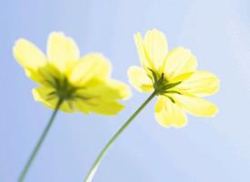 小清新田野花朵護眼桌面壁紙圖片