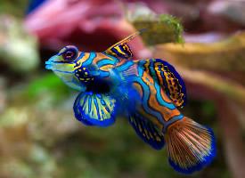 海底的魚兒圖片