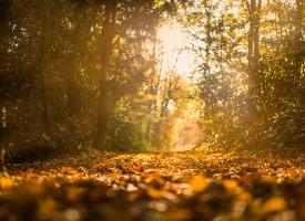 深秋树林落叶景色图片