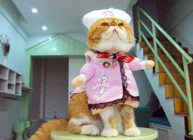 大脸加菲猫穿搞怪衣服的图片