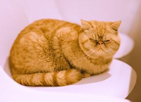 軟綿綿的小貓咪毛茸茸圖片欣賞
