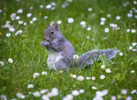 一組春天里可愛的小松鼠圖片欣賞