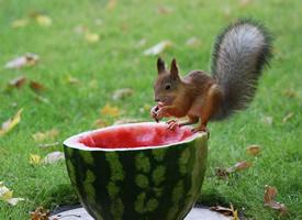 一組活潑可愛聰明的小松鼠圖片欣賞