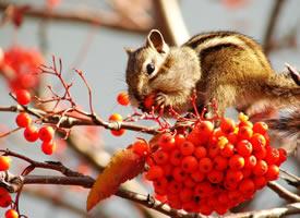 一組秋天唯美景象里的小松鼠圖片