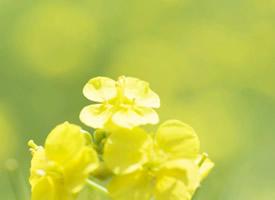 小清新田園花朵護眼桌面壁紙圖片