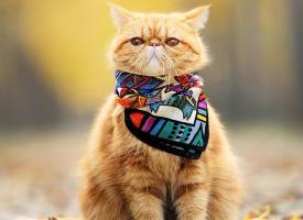 黄色加菲猫图片