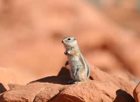 一組還比較年幼呆萌的小松鼠圖片